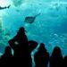 新江ノ島水族館!えのすいの魅力!